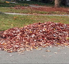 icon_leafpickup.png